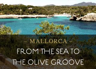 Vom Meer in den Olivenhahn